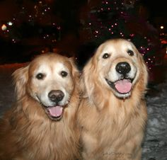 gorgeous dogs