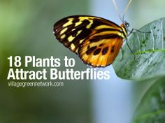 18 Plants to Attract Butterflies