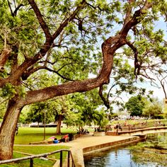 Sewell Park; San Marcos, Texas Texas State University, Bloom Where Youre Planted, Rio Grande Valley, Mountain City, Dripping Springs, South Texas, Texas Travel, Texas Hill Country, Texas