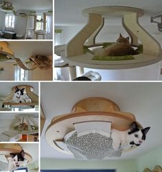How to Make a Cat Bed – Modern Magazin – Art, design, DIY projects, architecture… - Hunde und Katzen Diy Pour Chien, Diy Cat Hammock, Diy Cat Tree, Cat Playground, Cat Room, Cat Condo, Pet Furniture, Pet Home, Diy Stuffed Animals