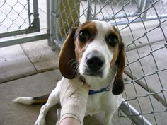 Adopt. Humane Society