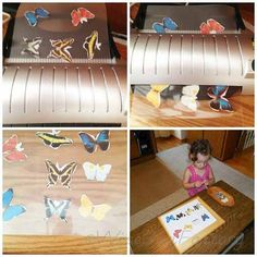 Butterfly Matching Montessori Inspired PDF --free emember area butterfly scientific name matching (spelling) and simple color matching cards Matching Cards, Wise Owl, Simple Colors, Caterpillar, Montessori, Toy Chest, Bugs, Butterflies, About Me Blog
