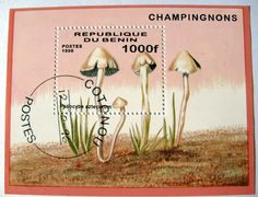 Cogumelos e Fungos