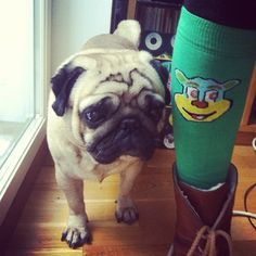 QooQoo socks! Socks, Lol, People, Fashion Design, Inspiration, Biblical Inspiration, People Illustration, Ankle Socks, Sock