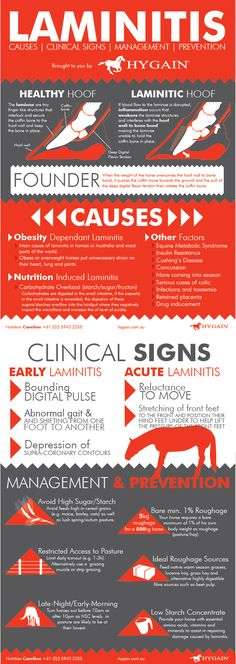 **FREE Laminitis Fact Sheet** This quick reference fact sheet provides you with a list of potential causes that trigger laminitis in horses, clinical signs for early detection of founder, management