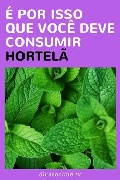 Benefícios da Hortelã Anti Stress, Body Motivation, Medicinal Plants, Aloe Vera, Good To Know, Home Remedies, Healthy Life, Health Tips, Plant Leaves