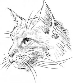 cat sketch Sketch of cat head Stock Illustration Animal Sketches, Art Drawings Sketches, Illustration Sketches, Animal Drawings, Drawings Of Cats, Illustration Animals, Sketch Head, Cat Sketch, Sketch Art