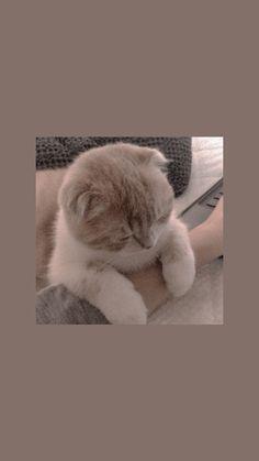 iphone wallpaper cat - w a l l p a p e r - # Iphone Wallpaper Cat, Tier Wallpaper, Cute Cat Wallpaper, Mood Wallpaper, Aesthetic Pastel Wallpaper, Iphone Background Wallpaper, Kawaii Wallpaper, Animal Wallpaper, Ocean Wallpaper