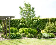 Sorbus dodong E, grön under vår och sommar.