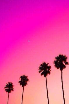 A pastel and fuchsia sunset on palm trees. Click to shop swimwear by Matthew…