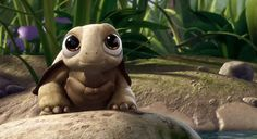 cute turtle - Google Search