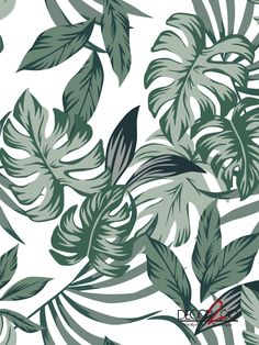 Our Big Green Leaves custom mural is ideal to be placed in any room of your house to add a fresh, natural style. Green Leaves, Plant Leaves, Amazing Greens, Fresh Green, Palms, Murals, Illusions, Tropical, Quote