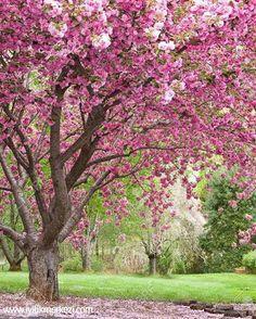 Sorduğum sorular tatmin edici cevaplar alır, çaldığım kapılar güleryüzle açılır, yürüdüğüm yollar sevgiyle aydınlanır. Güvenle soruyor, istiyor ve ilerliyorum. İlahi olarak seviliyor, korunuyor ve destekleniyorum. Güvendeyim...- iyilik'te  #bybegumkarace  #iyilikmerkezi
