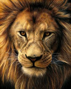 Tattoo Lion Realistic Drawings Of Realistic Pencil Drawings, Graphite Drawings, Animal Drawings, Art Drawings, Realistic Lion Drawing, Coloured Pencil Drawings, Drawing Faces, Lion Photography, Lion Painting