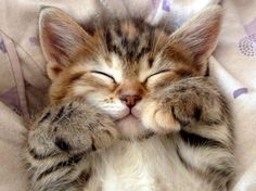 These cute kittens will melt your heart – Cute Animals Cute Baby Cats, Cute Little Animals, Cute Cats And Kittens, Kittens Cutest, Pretty Cats, Beautiful Cats, Animals Beautiful, Animals And Pets, Funny Animals