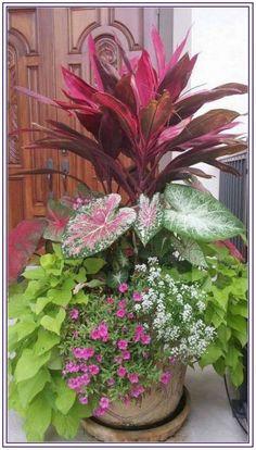 Container Flowers, Container Plants, Container Gardening, Beautiful Gardens, Beautiful Flowers, Indoor Gardening Supplies, Orquideas Cymbidium, Outdoor Planters, Garden Care