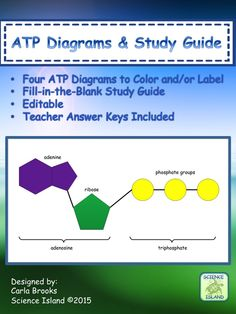 Four ATP diagrams for labeling and/or coloring help Biology students visualize important energy-transfer reactions in cells.