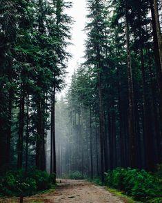 "82.4 mil Me gusta, 333 comentarios - BEAUTIFUL DESTINATIONS (@beautifuldestinations) en Instagram: ""Underneath evergreen trees  (: @theplaidshirt)"""