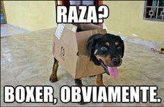 Memes en Español #learning #spanish #kids