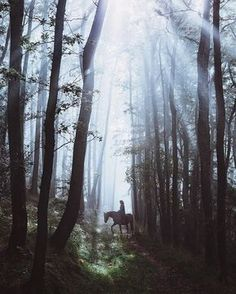 Find images and videos about photography, forest and fantasy on We Heart It - the app to get lost in what you love. Narnia, Foto Nature, Tv Anime, Rauch Fotografie, The Ancient Magus, Between Two Worlds, Black Mountain, Story Inspiration, Writing Inspiration