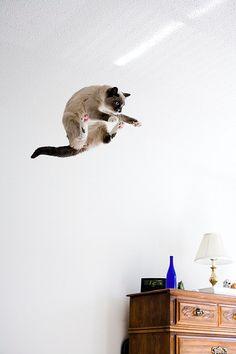 {weeeeeeeeee!} this kitty likes to fly