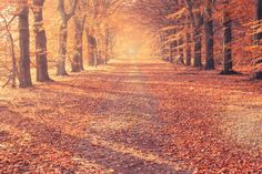Red and colorful autumn colors in the forest with a road and sunshine in the fall season - stock photo