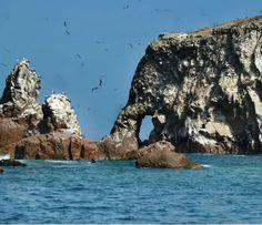 Isso aqui pode ser novidade pra algumas pessoas, mas o Peru, além de tudomais de maravilhosoque tem, ainda me inventou de ter um conjunto de ilhas fascinantemente habitadas só por lobos-marinhos,…