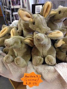 A basket of baby aardvarks at Aardvark Books, Shropshire