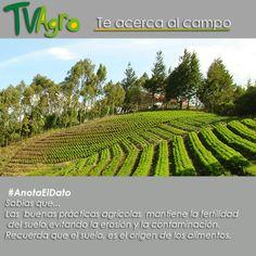 #AnotaElDato La conservación del suelo, depende de una buenas prácticas agrícolas.
