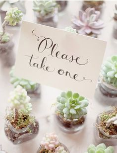 Succulent favors- totally doing this!---Would be cute as name-holders as well!