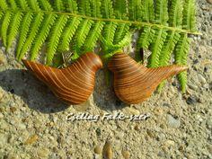 acacia wood bird pendant Wood Bird, Acacia Wood, Recycling, Pendant, Hang Tags, Pendants, Upcycle
