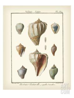 Volute Shells, Pl.384 Art Print by Diderot at Art.com