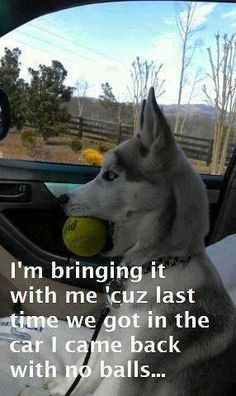 Funny Facebook Status: Dog with no balls funny facebook quote
