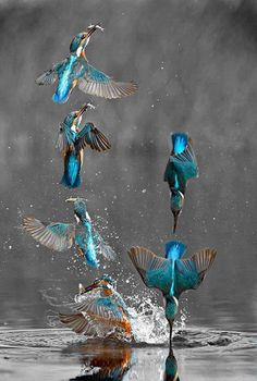 Kingfisher If you are in front of me, please do not slow down!