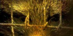 A Shocking Look Inside Chinese Fur Farms | PETA.org