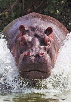 animales peligrosos del mundo amazonas