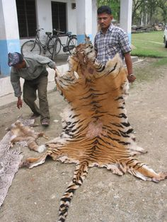 As home to half the world's estimated population of tigers, Indian measures to combat the stubborn threat of poaching are bound to come under serious international scrutiny.
