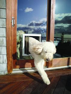 Simple Pet Furniture Sliding Glass Door Dog Door — Brand Resort Home Ideas Sliding Glass Dog Door, Sliding Patio Doors, Glass Doors, Diy Doggie Door, Doggy Doors, Dog Door Installation, Pet Furniture, Dog Runs, Diy Stuffed Animals
