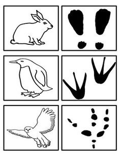 Arctic Animals - Footprint Matching Activity by Preschool Everyday School Age Activities, Snow Activities, Animal Activities, Canadian Animals, Canadian Wildlife, Woodland Animals Theme, Forest Animals, Animal Footprints, Artic Animals