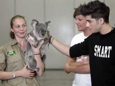 Now i really want a koala bear... O and One Direction