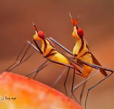 Fotografia season of love de bug eye :) na 500px
