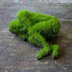 DIY: sculptures crafted out of soil and wheat grass seeds. from craftgawker - a blog with many many ideas