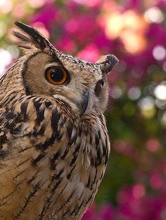 Owl... cool profile!