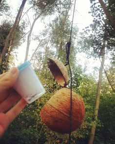 Coconuts can be found in tropical climates, but I'm guessing geocaching coconuts could be found in trees anywhere.  #IBGCp