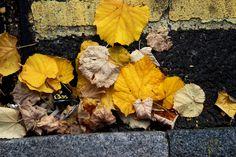 LEAVES 27 SEPTEMBER 2015 29 Fotor by LUSHMONTANAS.deviantart.com on @DeviantArt
