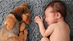 8 conseils pour préparer votre animal à l'arrivée de votre bébé - Astuces de grand mère
