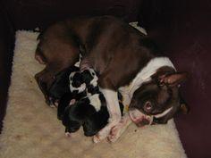 Hannah's first litter of pups (2012)