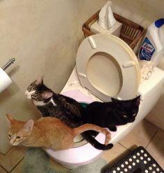 Gatos treinados - Fotos e fotos - Seu portal de imagens grátis