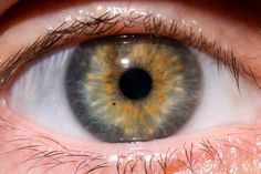 What eye problems & diseases Doctors find by looking at your eyes.