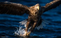In your face by André Boss on 500px